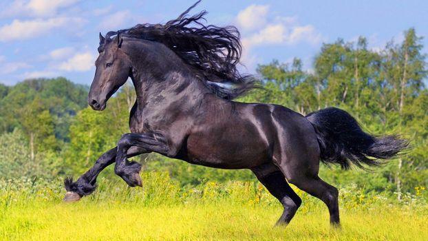 Фото бесплатно конь, трава, лес