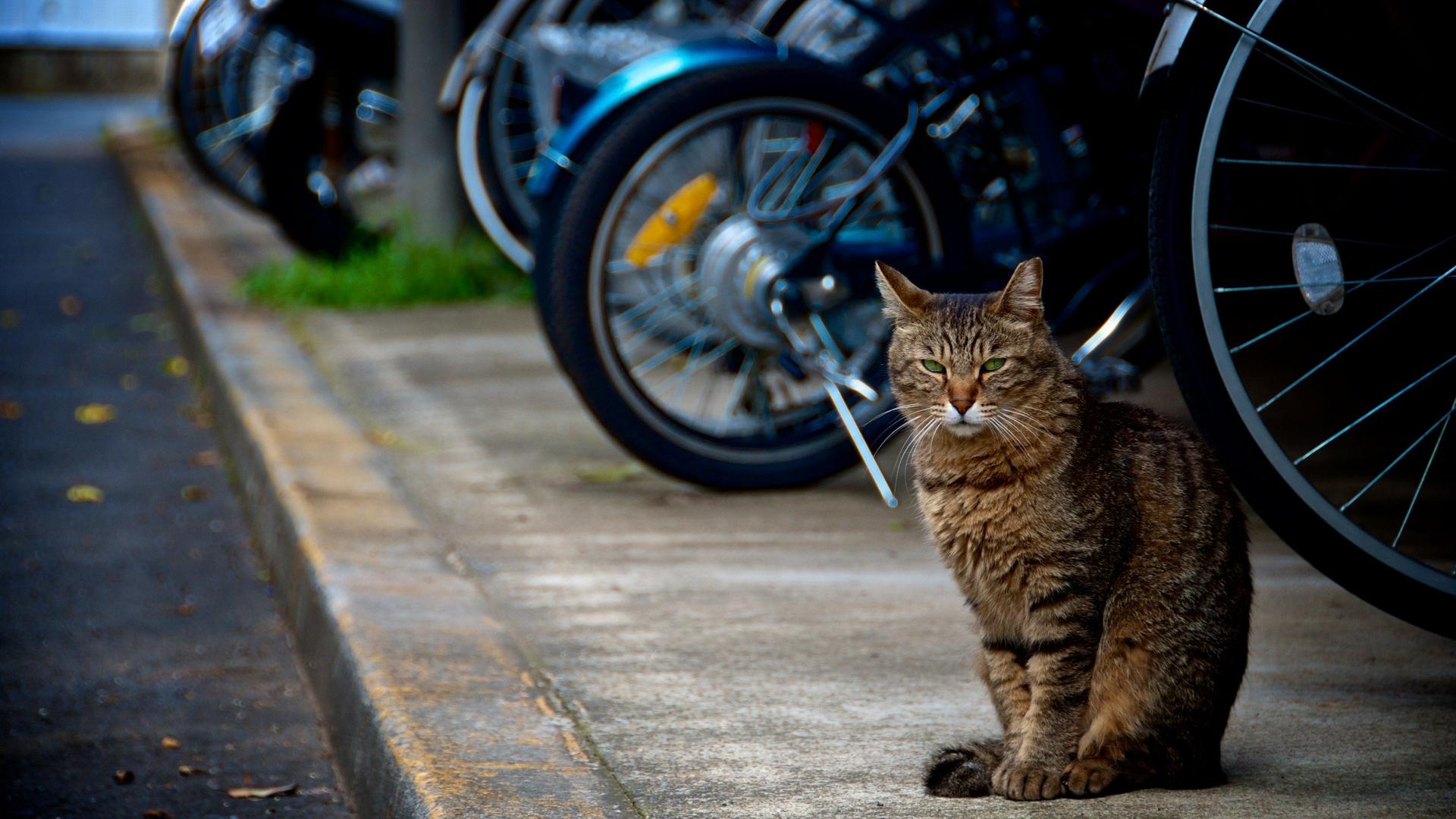 кот, сидит, тратуар