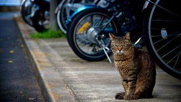 Фото бесплатно кот, сидит, тратуар