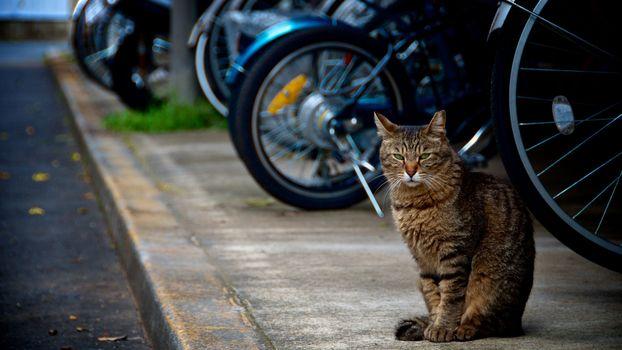 Бесплатные фото кот,сидит,тратуар,стоянка,велосипеды,мотоциклы,бордюр,кошки