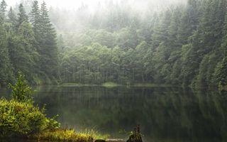 Бесплатные фото лес,деревья,туман,озеро,отражение,трава,природа
