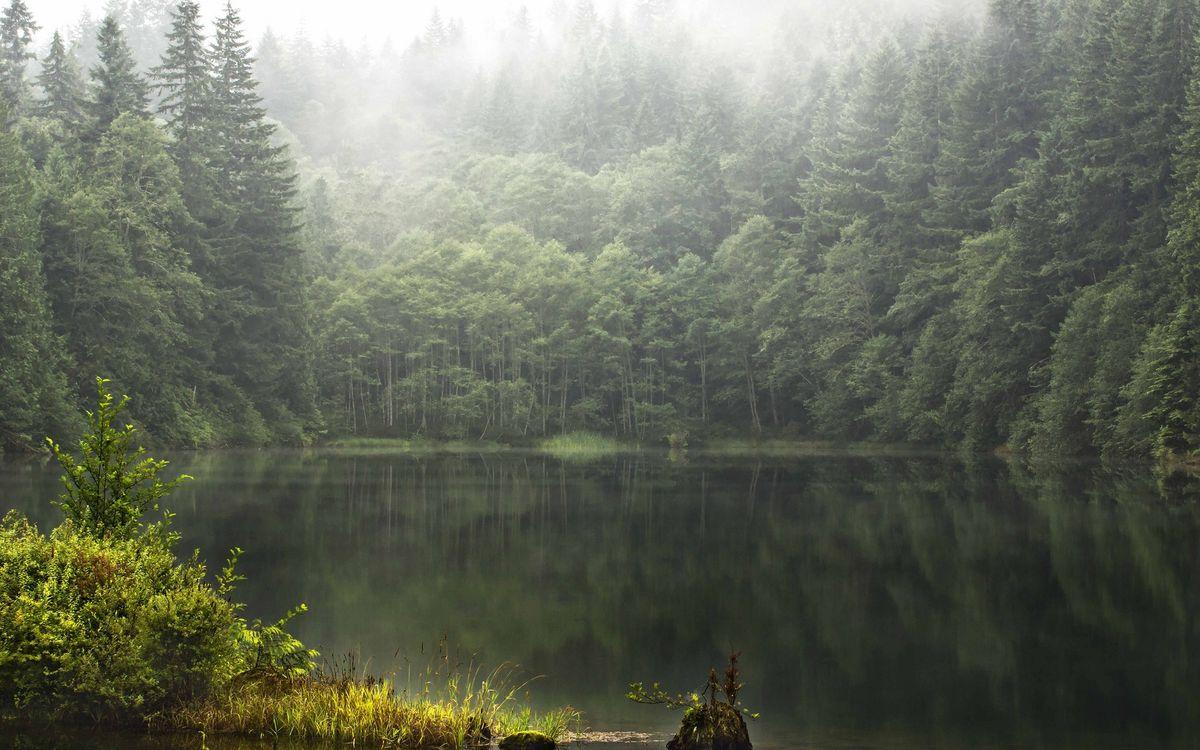 Фото бесплатно лес, деревья, туман, озеро, отражение, трава, природа, природа - скачать на рабочий стол