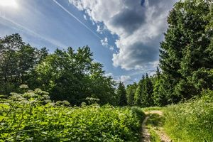 Бесплатные фото лето,солнце,небо,зелень,дорога,пейзажи