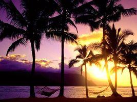 Фото бесплатно пальмы, темно, море