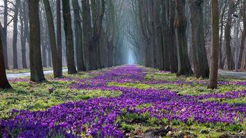 Фото бесплатно парк, аллея, дорожки, деревья, цветы, фиолетовые, трава, разное
