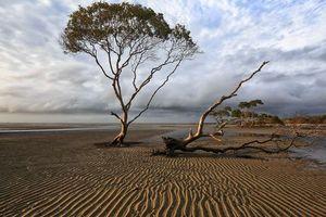 Заставки побережье, море, отлив, пляж, песок, вода, деревья