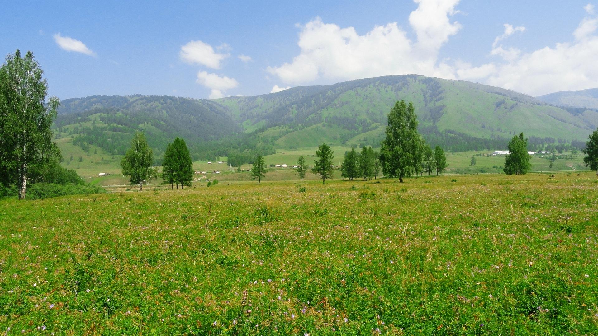 Луг поле