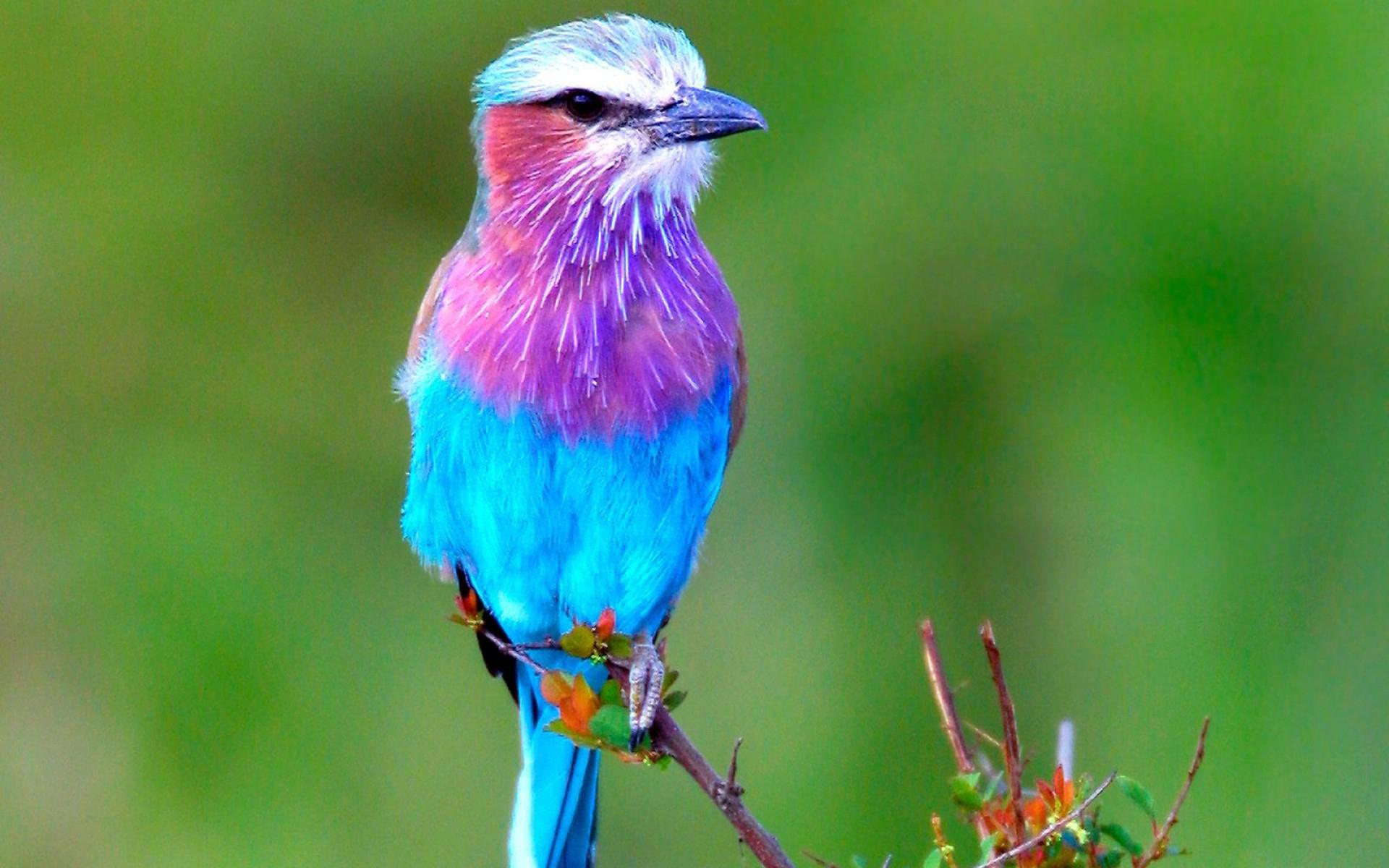 птица, цветная, клюв