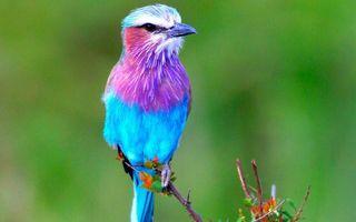 Photo free bird, color, beak