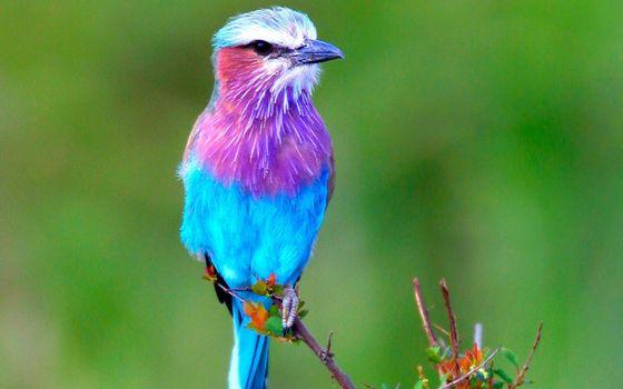 Фото бесплатно птица, цветная, клюв