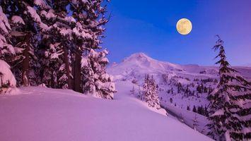 Бесплатные фото склон, полнолуние, деревья, небо, луна, ночь, снег