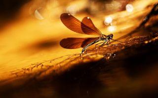 Бесплатные фото стрекоза,крылья,лапы,глаза,ветка,трава,насекомые