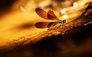 Photo free dragonfly, wings, paws