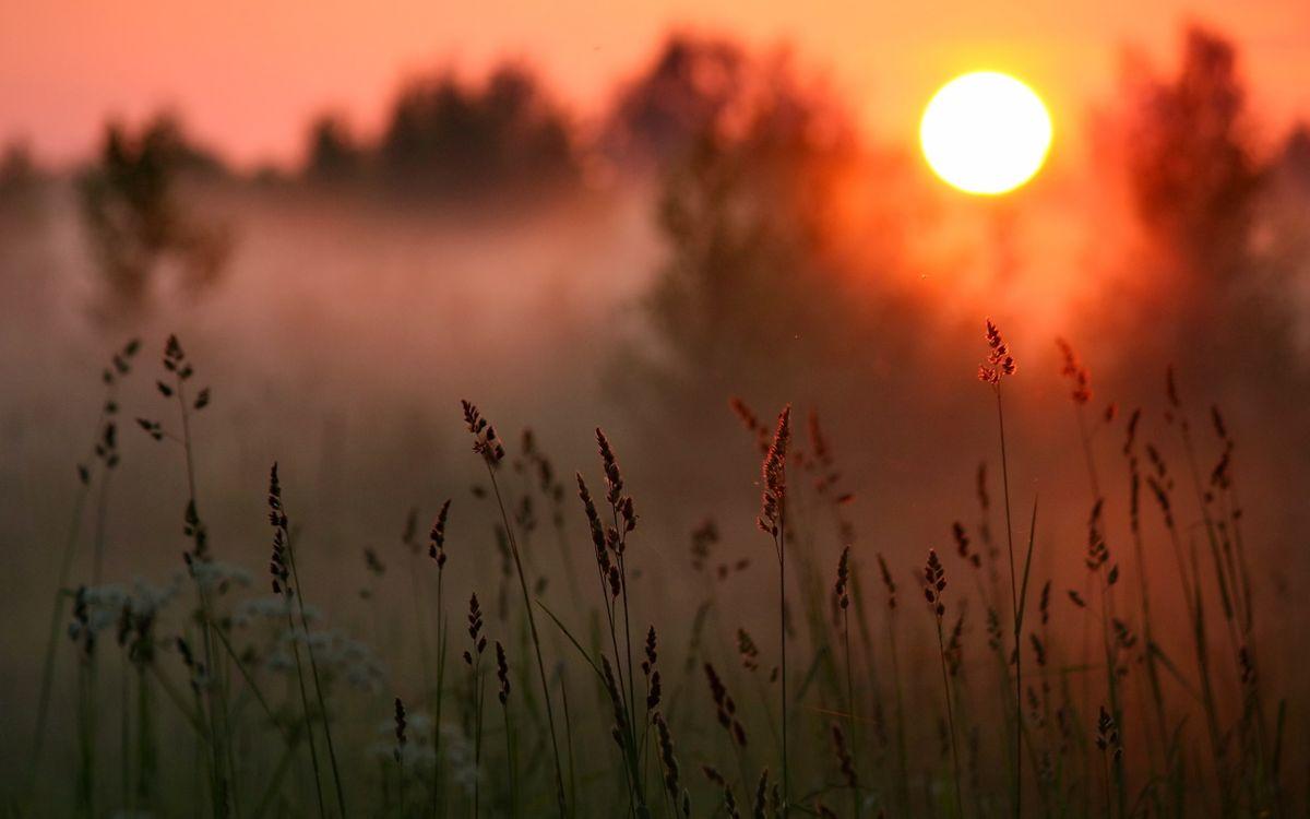 Фото бесплатно трава, поле, луг, лето, тепло, рассвет, небо, туман, солнце, лучи, свет, природа, природа