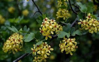 Бесплатные фото ветки,цветки,аромат,листья,соцветия,растение,лето