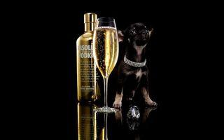 Фото бесплатно водка, абсолют, бокал, шампанское, собака, щенок, ошейник, бриллианты, перстень, стиль