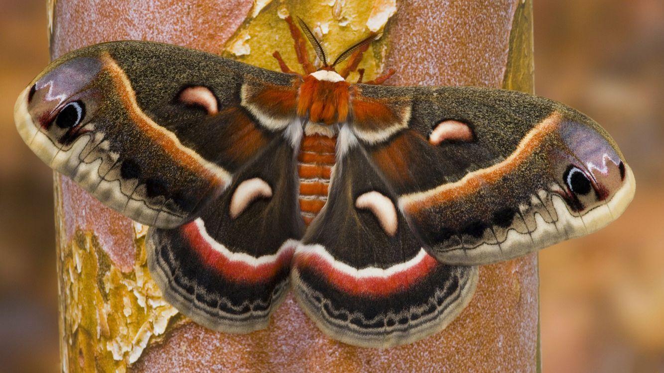 Фото бесплатно бабочка, крылья, усики - на рабочий стол