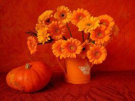 Фото бесплатно цветы, тыква, натюрморт