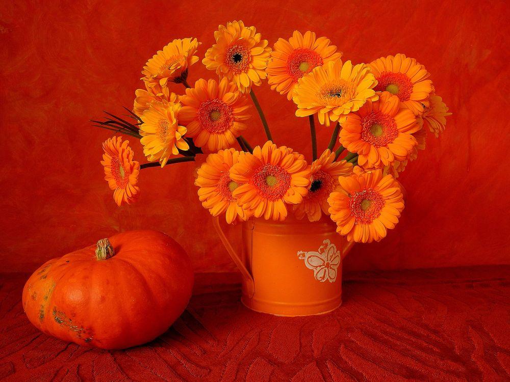 Фото бесплатно цветы, тыква, натюрморт, цветы