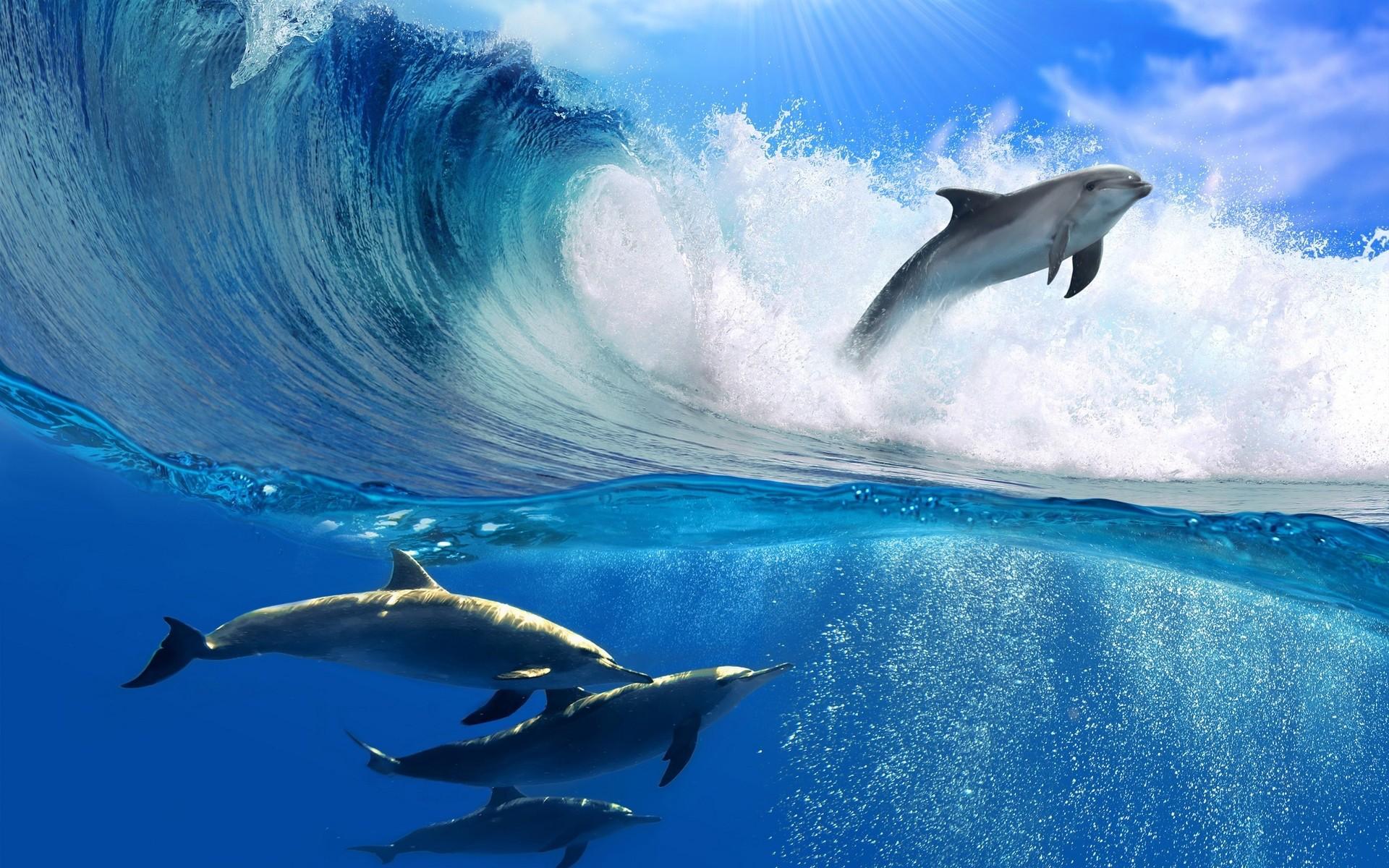 Дельфины море океан вода волны