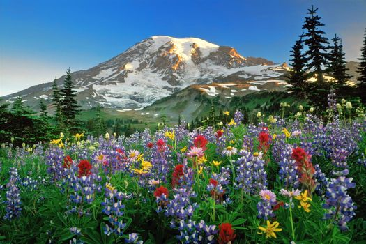 Фото бесплатно горы, цветы, красиво
