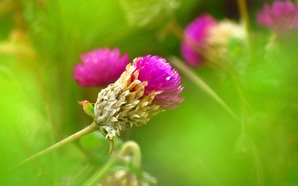 Фото бесплатно клевер, зелень, трава - на рабочий стол