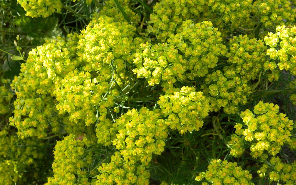 Фото бесплатно куст, цветок, соцветия, весна, лето, растение, ветки, аромат, цветы, цветы