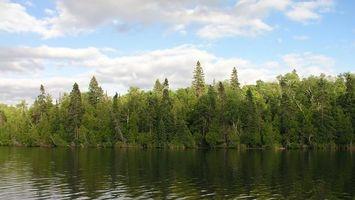 Бесплатные фото лес,деревья,берег,вода,река,небо,облака
