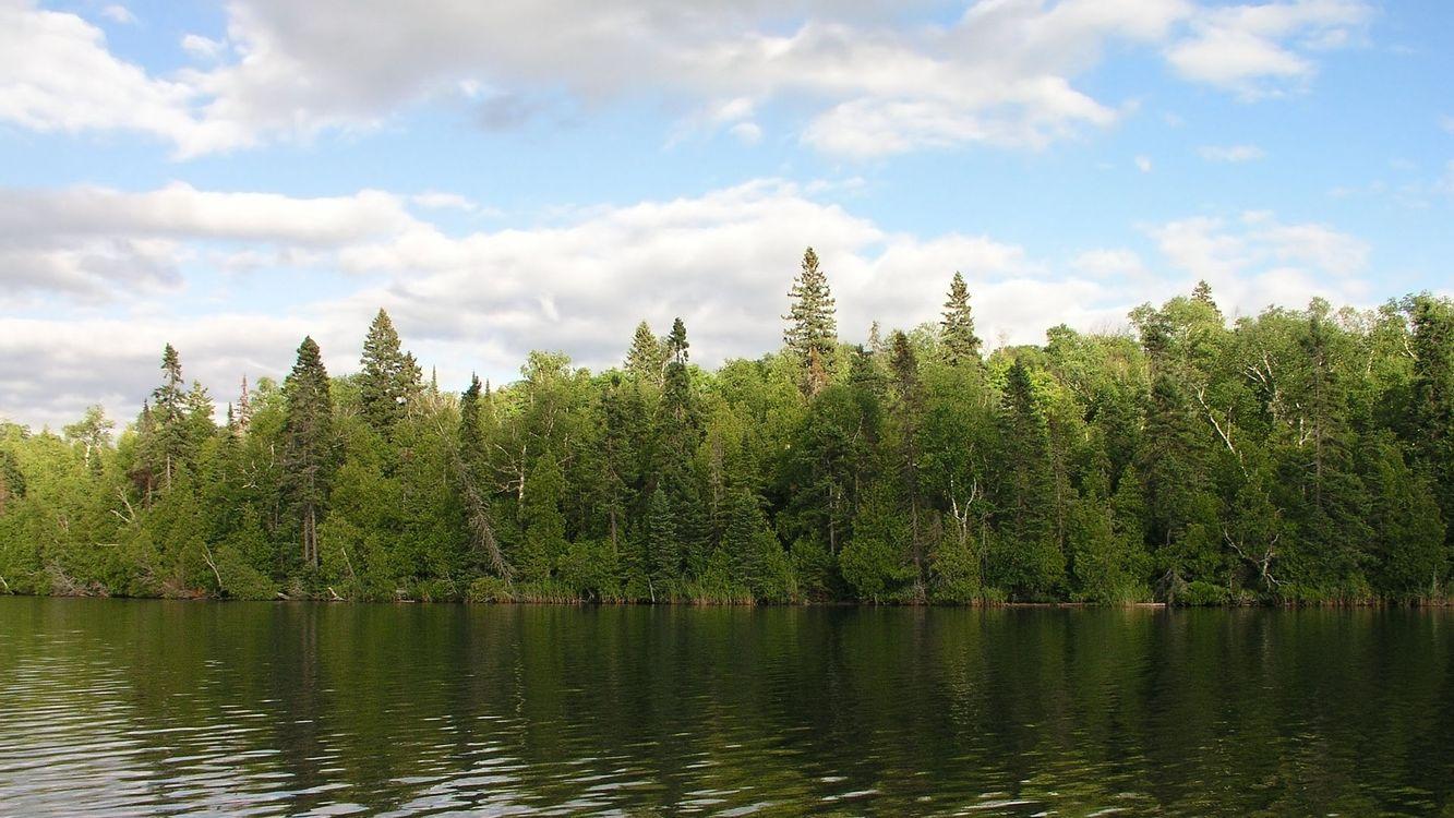 Фото бесплатно лес, деревья, берег, вода, река, небо, облака, природа, природа