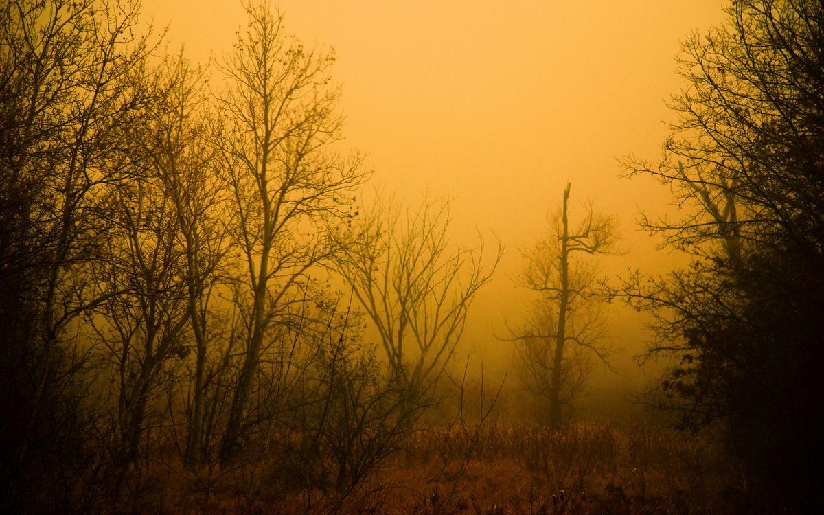 Фото бесплатно лес, туман, рассвет, деревья, трава, поляна, природа, природа