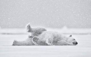 Фото бесплатно медведь, белый, полярный
