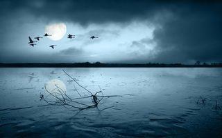 Бесплатные фото море,река,вода,птицы,утки,деревья,небо