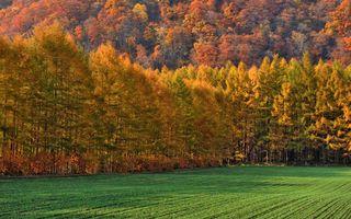 Бесплатные фото осень,поле,лес,деревья,листья,елки,трава