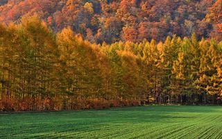 Фото бесплатно осень, поле, лес, деревья, листья, елки, трава, природа