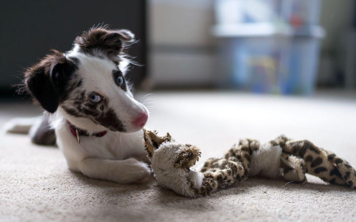 Фото бесплатно уши, собака, игрушка - на рабочий стол