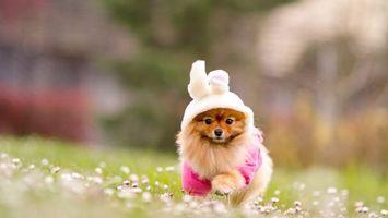 Фото бесплатно пес, щенок, одежда