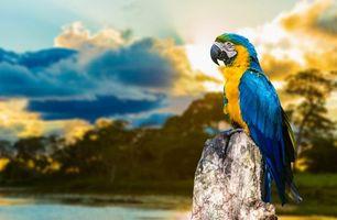 Бесплатные фото попугая,желтый,синий клюв,черный,глаза,деревья,птицы