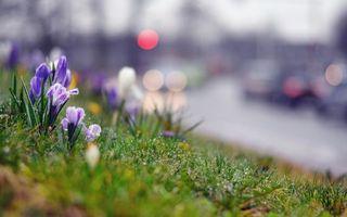 Бесплатные фото трава,газон,растение,лепестки,день,блики,фокус