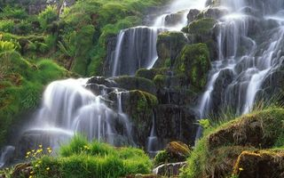 Обои вода, река, водопад, кусты, трава, камни, цветы, природа