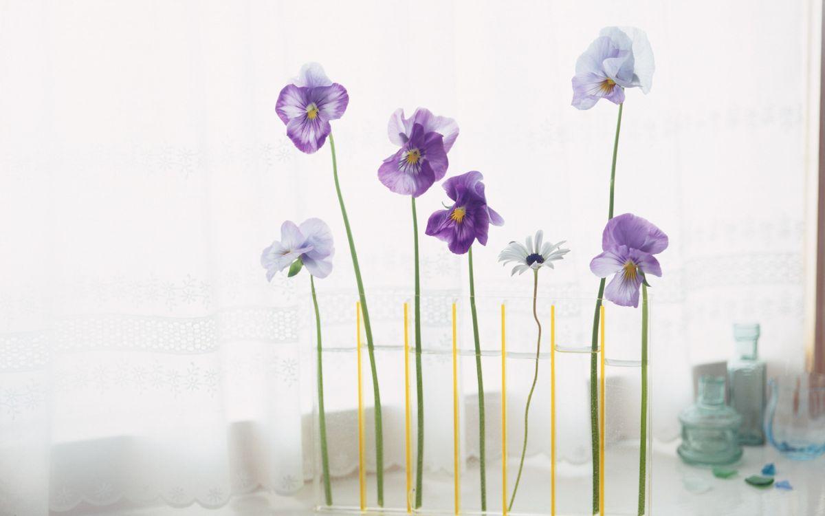 Фото бесплатно цветы, вазы, на столике, у окна, тюль, разное