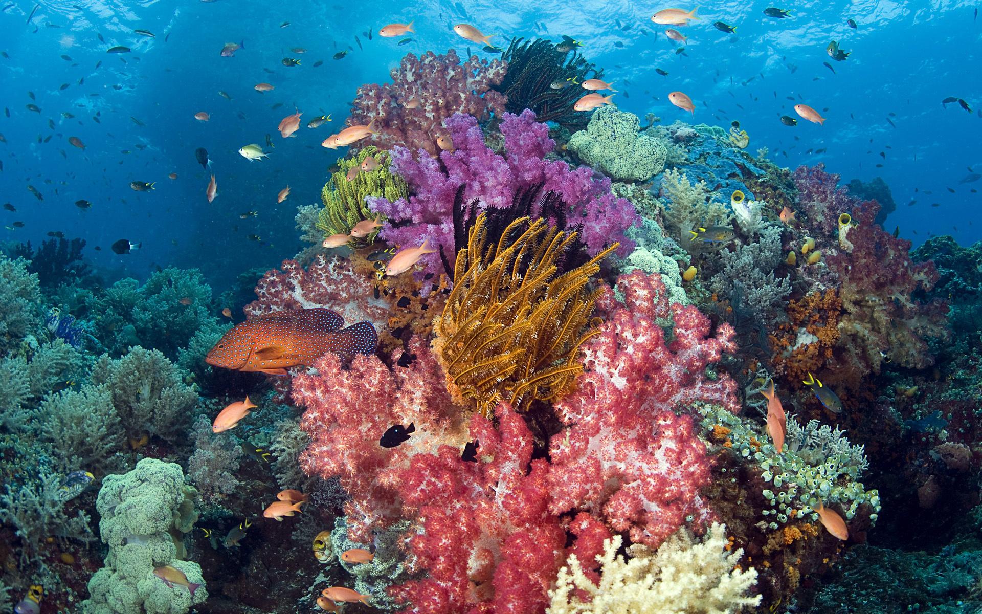 Рыбки рыбы море кораллы подводный