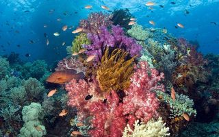 Photo free fish, sea, corals