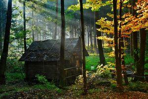 Фото бесплатно дом, в лесу, старый