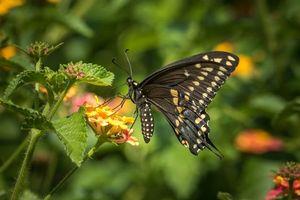 Фото бесплатно бабочка, цветок, цветы