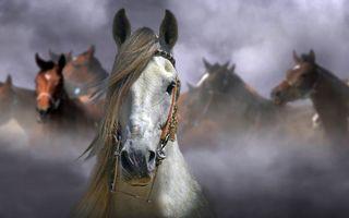 Заставки белый конь, лошади, морда