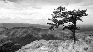 Фото бесплатно дерево, сухое, небо, горы, скалы, облака, природа