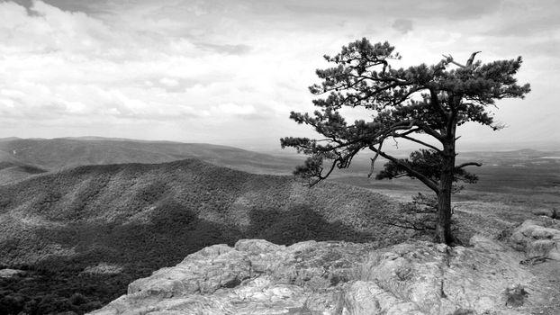 Photo free tree, dry, sky