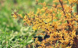 Бесплатные фото дерево,куст,листья,ветки,осень,лес,парк