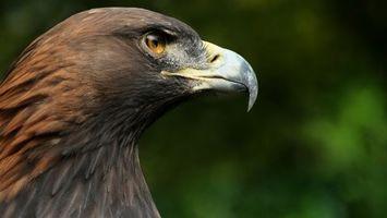 Фото бесплатно клюв, глаз, перья