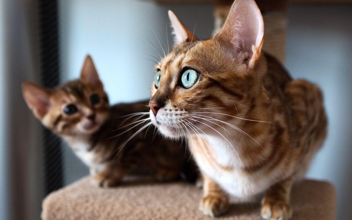 Фото бесплатно котенок, кошка, морда - на рабочий стол